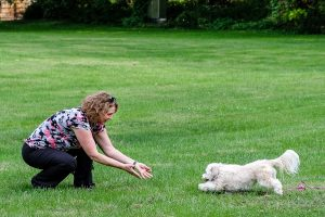 Puppy Dog Training Private Coaching In Minnesota Good Dog Camp
